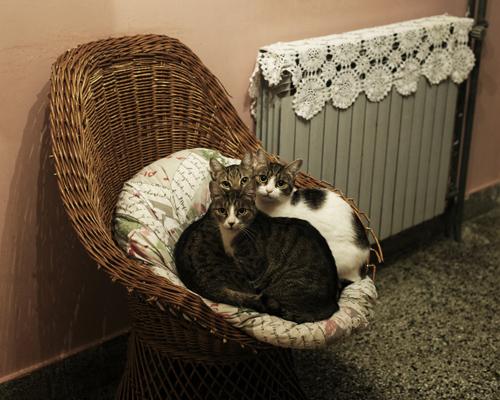 """Les chats de la fille de Svetislav. Quartier de Borča.  """"Sa mère, c'est une capitaliste.""""  Svetislav a vécu à Paris avec ses parents quand il était enfant. Ils ont construit cette maison qu'il partage avec sa fille, à lui le rez-de-chaussé, à elle l'étage. Il s n'avaient pas fui Tito, leur plan était de revenir et de construire. Il se définit comme un «punk-anar». Il n'a plus de papiers, achète son tabac au marché noir et est un alcoolique repenti.  Il vit de la vente """"d'artefacts"""" communistes et post-URSS : Vinyle de punk yougoslaves, magazines, livres, etc. Sous Tito, il faisait de la contrebande : ramenait des pièces pour voitures de Grèce ou vendait des bananes dans la Roumanie des Ceausescu à 50 Lei la pièce, ce qui n'empêchaient pas les gens de se jeter dessus.   Il ne voulait pas être pris en photo."""